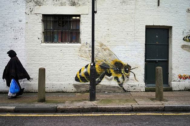 bees 010