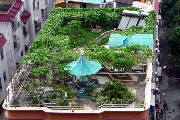 How-To-Start-a-Rooftop-Garden