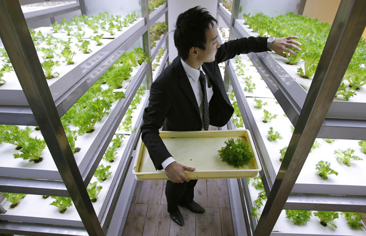 "An employee harvests vegetables grown under Hybrid Electrode Fluroescent Lamps (HEFL) inside an office of Pasona Group, an employment and staffing company, during a photo opportunity in Tokyo October 20, 2010. Vegetables, fruits and rice are grown and harvested by the employees at the company's ""urban farm"", aimed at creating a working environment coexisting with nature, according to the company. Negotiators from over 190 countries are gathered in Nagoya, Japan for a United Nations meeting to discuss ways to fight rising extinctions of plants and animals from pollution, climate change and habitat loss. REUTERS/Yuriko Nakao (JAPAN - Tags: ENVIRONMENT AGRICULTURE FOOD BUSINESS) - RTXTMQS"