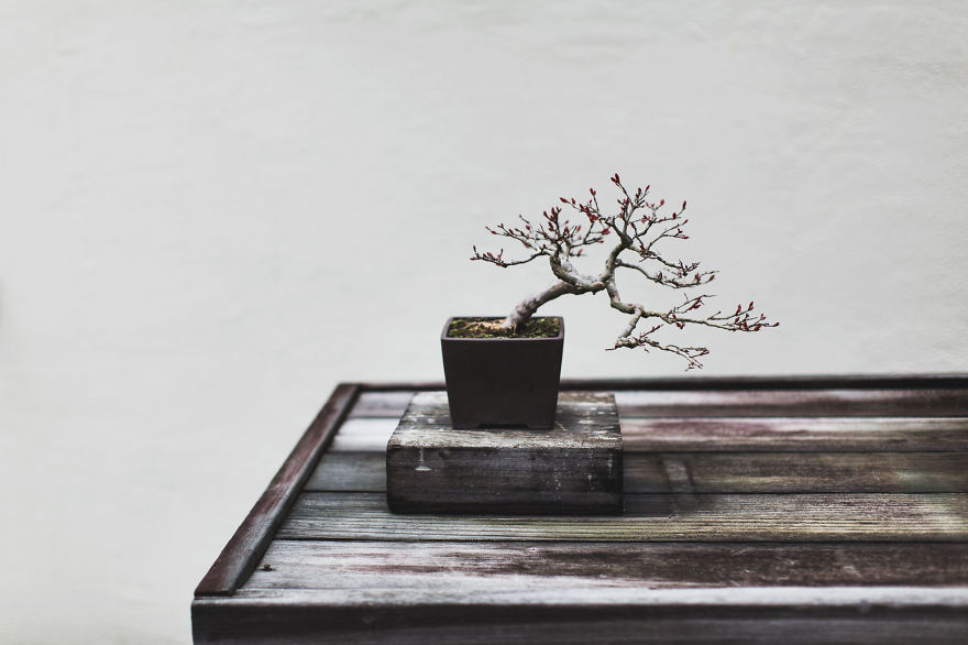 For-two-years-I-photographed-bonsai-trees-57763a90ad4a4__880