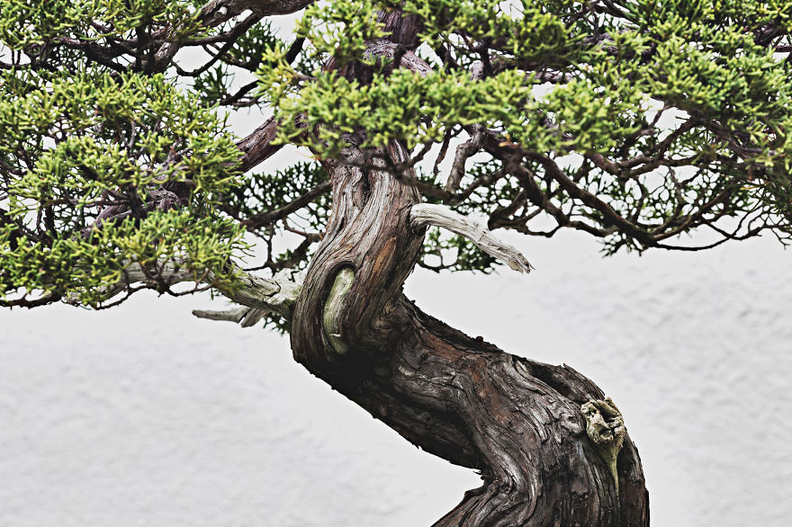 For-two-years-I-photographed-bonsai-trees-57763a9434c80__880