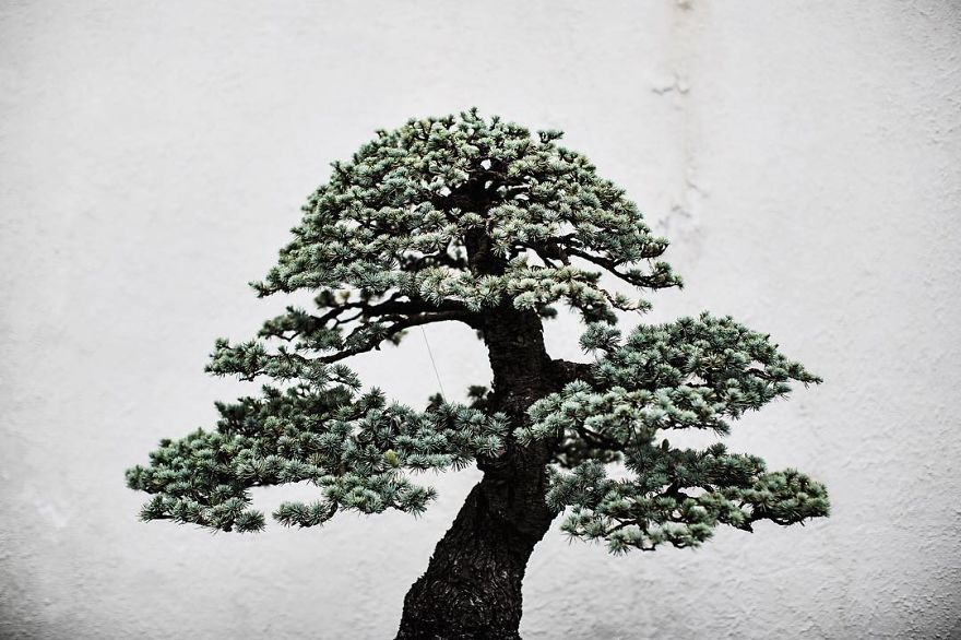 For-two-years-I-photographed-bonsai-trees-57763ab1de97a__880