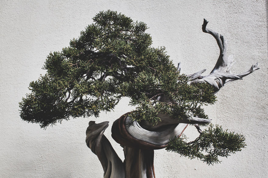 For-two-years-I-photographed-bonsai-trees-57763abf21ba9__880
